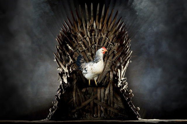 chicken occupies the iron throne